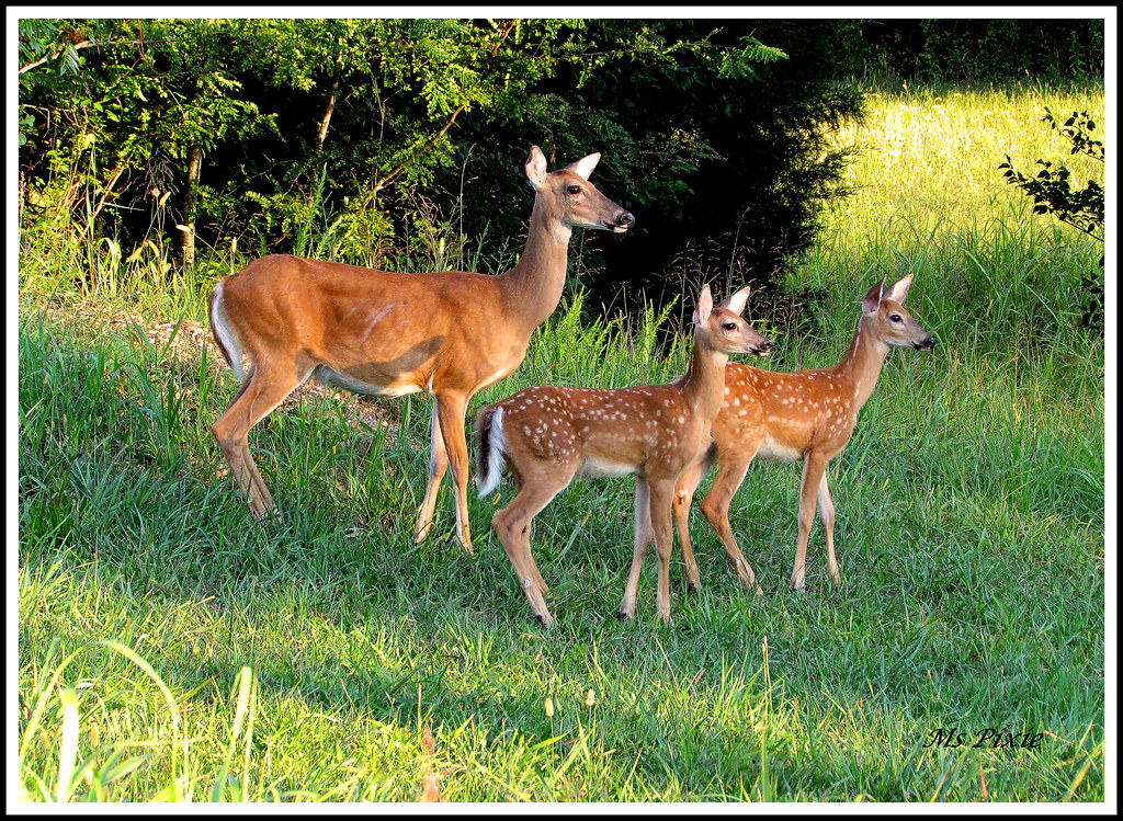 """It's A """"Deer"""" Member Of The Family Now"""