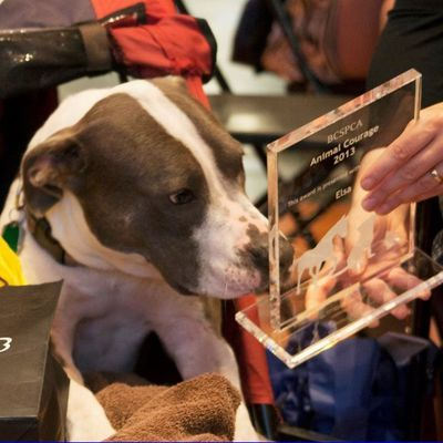 An Inspiring Pooch…Who's A Great Fighter