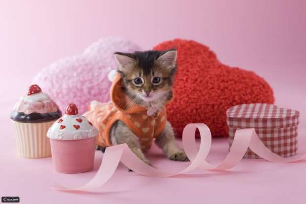 Millions Dollars Gifts for Pets