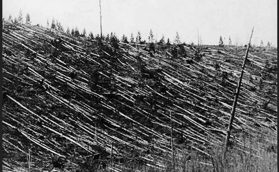 Forest at Tunguska after the 1908 impact